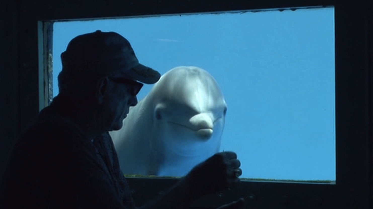 Taiji dolphin slaughter caught on film: 'The Cove' (2009)